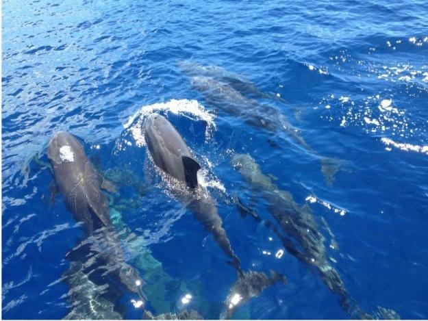 Dophins - by Nico Saputra